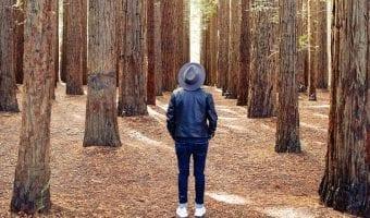 Live a long life like trees